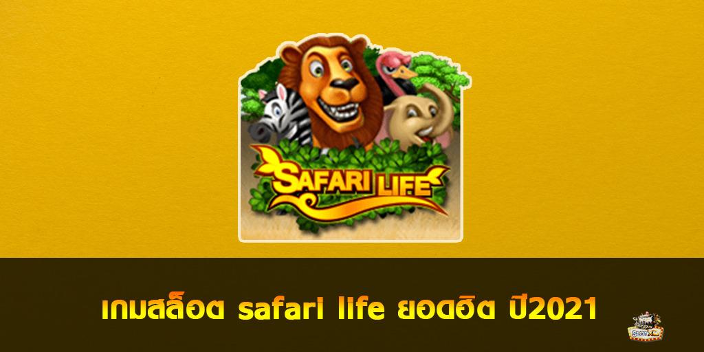 safari life
